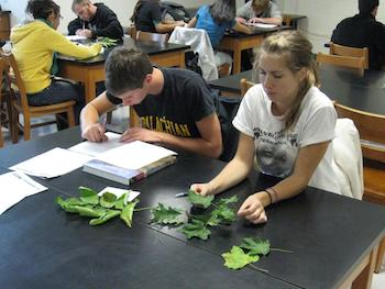 students in lab activity