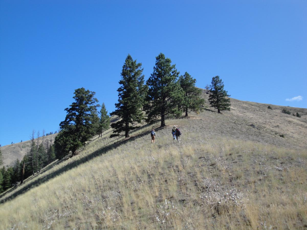 Hiking to trees at the Rock Creek East study site