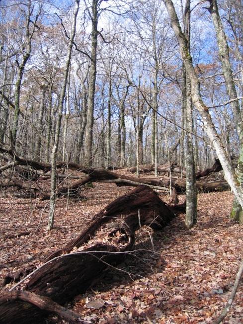 Bluff Mountain trees