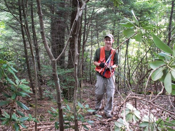 hemlock fieldwork